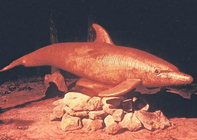 1983 Dolphin. White Beech, Burdekin Plum Eyes, Leichhardt Base. 3m long