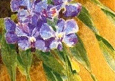 Blue Vanda