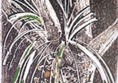 Bush Orchid