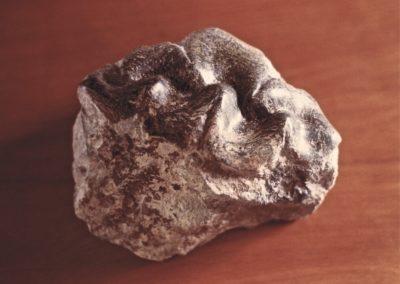 1985 Clam. Silkwood Soapstone. 20cm long
