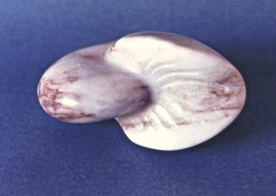 1987 Nautilus. Chillagoe Marble. 16cm long