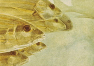 Hook Observatory Fish