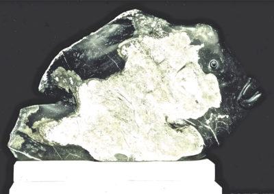 2002 Maori Wrasse. Ten Mile Limestone. 83cm long