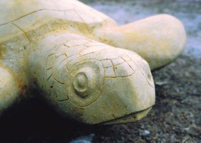 2004 Green Sea Turtle. Detail