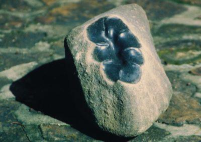 2005 Clam. Basalt Rock. 35cm long