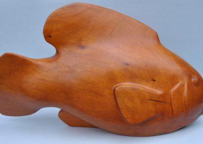 2008 Groper. White Beech. 61cm long