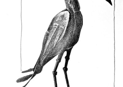 Zim Stork 2010