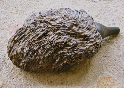 2010 Echidna. Found Wood and Ebony. 27cm long